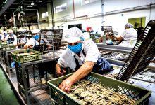 Foco de Covid-19 confirmado na Gencoal de Vila do Conde mas empresa continua a funcionar