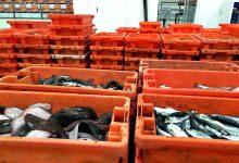 GNR apreende 449 quilogramas de raia por fuga ao leilão da lota na Docapesca de Matosinhos