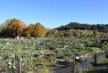 Câmara da Maia lança projeto de compostagem comunitária através de hortas biológicas