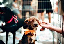 Parte dos cães adotados em 2020 no Grande Porto adoeceu quando o último confinamento acabou