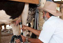 Lactogal paga mais 1,5 cêntimos por litro de leite a cooperativas depois de protesto de produtores