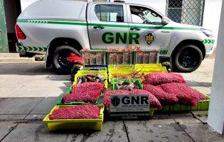 Unidade de Controlo Costeiro da GNR encerrou exploração de aquicultura ilegal em Matosinhos